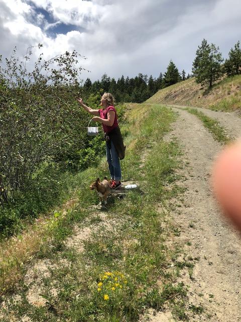 Wild Edibles Walk in Wilden